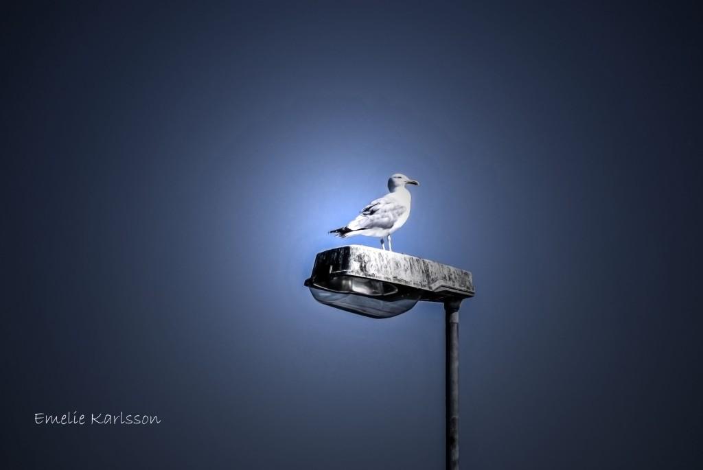 redigerad fågel norra djurgården
